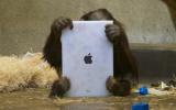 Win jij de nieuwe iPad?